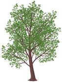 Summer tree — Stock Vector