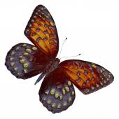 Butterfly Design — Stock Photo