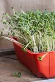 Mini salad — Stock Photo