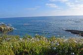 лагуна бич побережья & сады — Стоковое фото
