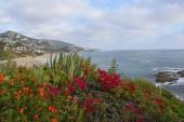 Laguna Beach Coastline & Gardens — Stock Photo