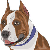 Vector american staffordshire terrier — Stock Vector