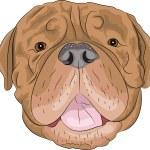 Vector Bordeaux mastiff — Stock Vector #52884815