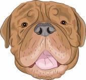 Vector Bordeaux mastiff — Stock Vector