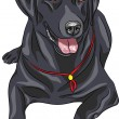 Постер, плакат: Vector sketch dog breed Labrador Retriever