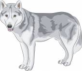 Vector Czechoslovakian Wolfdog — Stock Vector