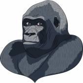 Vetor head gorilla. — Stock Vector