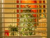 Bruges. Christmas tree outside the window. — Stock Photo