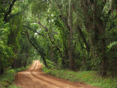 Red Clay Canopied Country Road — Stock Photo