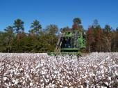 A cotton picker following the rows and picking cotton. — Stock Photo