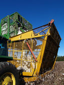 A cotton picker is dumping the load into the boll buggy. — Stock Photo