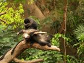 One monkey looking for fleas on another monkey, — Stockfoto