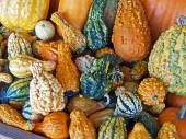 Colorful pile of an assortment of ornamental gourds. — 图库照片