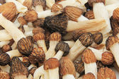 Close-up of a Bunch of Wild Morel Mushrooms — Stock Photo