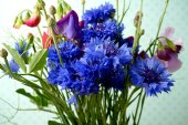 Bouguet with cornflower and sweetpea — Stock Photo