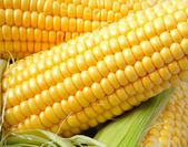 Delicious yellow summer corn on the cob — Stock Photo