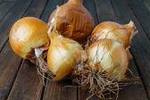 Lot of ripe onion — Stock Photo
