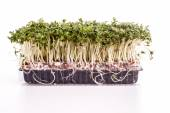 Fresh healthy Green Cress — Stock Photo