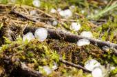 Hail lies on the forest floor — 图库照片