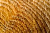 Tree stump texture — Stock Photo