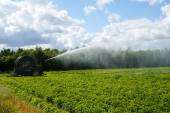 Irrigation pivot watering the Fields — Stock Photo
