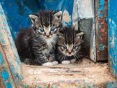 Two cute kittens — Stock Photo