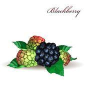 Blackberry — Stock Vector