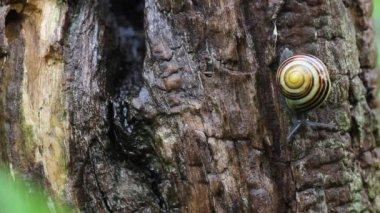 Snail examining bark — Stock Video