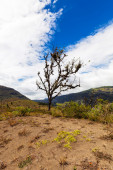 Andes mountains picks, south america, tree — Stock fotografie