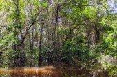 Cuyabeno river in Cuyabeno reserve, south america, Ecuador — Stock Photo