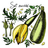 Set with zucchini and inflorescences — Stock Vector