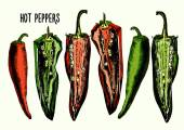 Set of hot peppers — 图库矢量图片