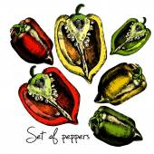 Set of  peppers. Illustrations. — 图库矢量图片