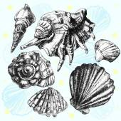 Illustration with different realistic shells — Stock Vector