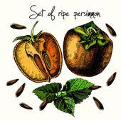 Set of ripe persimmon. — Stock Vector
