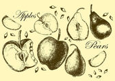 Set of drawing apples and pears. Illustrations. — Stock Vector