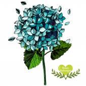Hand-drawn beautiful flower hydrangea. — Stock Vector