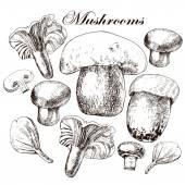 Vector set of hand drawn edible mushrooms — Stock Vector