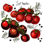 Set of hand drawn tomatoes — Vettoriale Stock