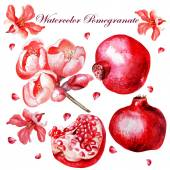 Beautiful watercolor set with fruits and flowers of pomegranate. — Stock Vector