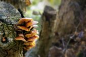 Fungus at an old tree trunk — Stock Photo
