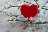 Red heart  with flower branch,  love symbol for valentine's day — Stock Photo