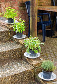 Herbs in plant pots growing on the garden stairs — Stock Photo