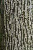 Bark of a tree trunk, background texture — Stock Photo