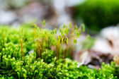 Macro shoot of green moss — Stock Photo