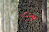 Red arrows painted on a tree trunk — Stock Photo
