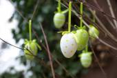 Green patterned easter eggs hanging in bare branches — Stock Photo