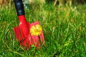Weeds in the lawn, red garden shovel behind coltsfoot in the gra — Foto Stock