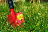 Weeds in the lawn, red garden shovel behind coltsfoot in the gra — Stok fotoğraf