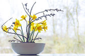 Spring decoration, daffodils and pussy willow in a ceramic bowl — Stock Photo